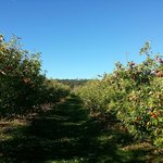 Spring Valley Orchard