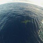 North Shore Shark Adventures