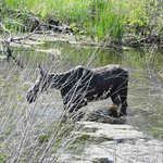 Moose seen on Eco Tour Adventure