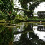 Live Guided Tours @ Tropical Spice Garden