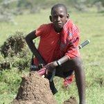 masaj a termitiště