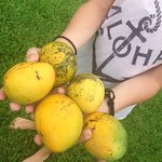 Mangos right in our backyard of the 3 bedroom bungalow