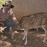 This domesticated inside the JLR Camp Chital is very friendly