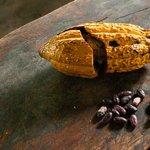 Profitez de votre séjour pour découvrir le cacao national