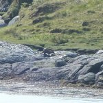 Otter watching from the bus stop?