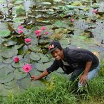 the gardener with a lotus flower
