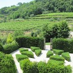 Partial view of garden and vineyards from our balcony