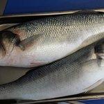 4KG Line Caught Sea Bass