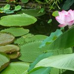 Great Lily Pond