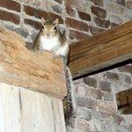 smokehouse squirrel