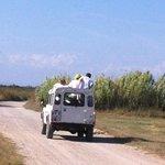 Safari en petite Camargue avec un guide, circuit 1/2 journée