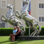 silver stallions