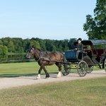 Pony & Carriage Tour