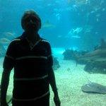 Em frente ao aquário central
