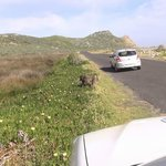 Cape Point Nature Reserve (Cape of Good Hope 1)