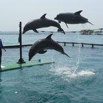 Ver golfinhos, atração indispensável