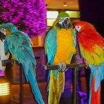 Parrot show x