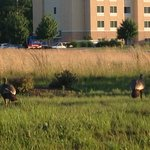 Side view of the hotel and these are wild turkeys!