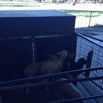 Lamb @ the Farm Show