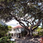 Fig tree by reception