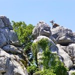 mountain goat at the top