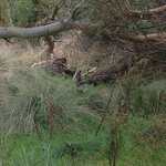 Spot the Wallaby