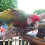 macaw 18 years old