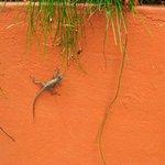 A few friendly geckoes