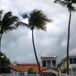 Tres palmas