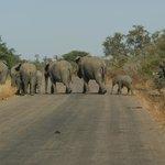 Elephant family on the move