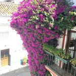 It's not the easiest venue to find in Marbella's narrow lanes. Look for the beautiful purple flo