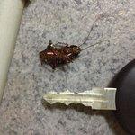 Один из убитых тараканов прямо в коридоре.