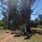 Allée des Eucalyptus