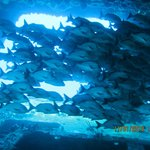 Inside the C-58 Mine Sweeper 85' deep wreck dive