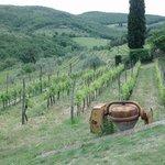 Beautiful local vineyard