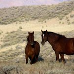 Wild horses roam throughout the valley and nearby mountains