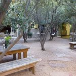 Outdoor area of 1 of the restaurants there with seating under the olive trees