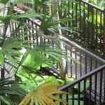 Tropical walkway to room