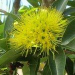 Beautiful tropical flora