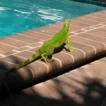 Visitor at pool