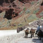 Heading down and see the donkeys