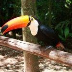 Парк птиц недалеко от отеля, ходит бесплатный шаттл