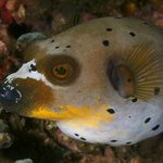 Ankermi / Happy Dive Resort Foto