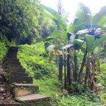 лестница для отважных путешественников,ведущая вниз