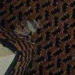 Ragged carpet