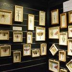 mounted specimens of butterflies