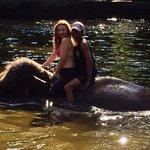 Compartiendo con los  Elefantes en su piscina