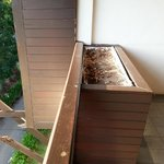 Rotten wood support and dried up planter box