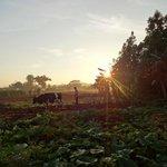 Lever du soleil depuis casa de Leyani y Osvedy