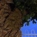Big beautiful trees grow through Ristorante della Rosa